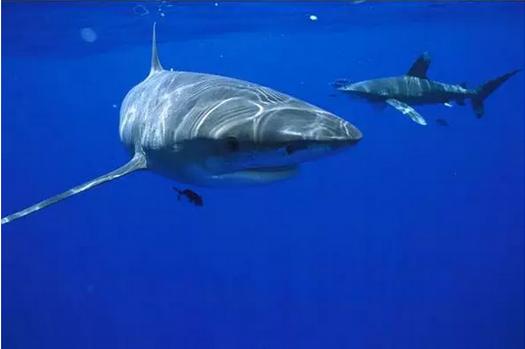 鲨鱼来啦!青田首届海洋生物展,小伙伴们约起来吧!免费门票送送送