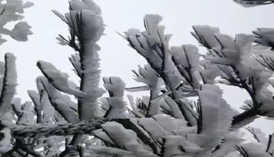 乐清已雪满山头, 美得不像话!