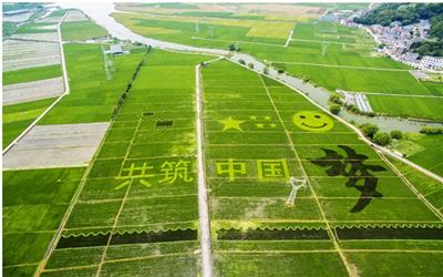 乐清惊现百亩彩稻田,8月底是最佳观赏期,来呀~
