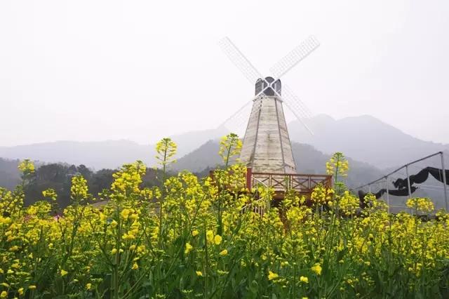 桐溪风景区】:它由湖心岛,龙潭,岩庵组成.